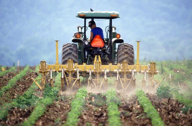Jak uzyskiwać duże plony w hodowli selera?